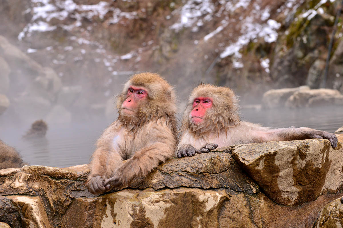 Jigokudani Monkey Park japan