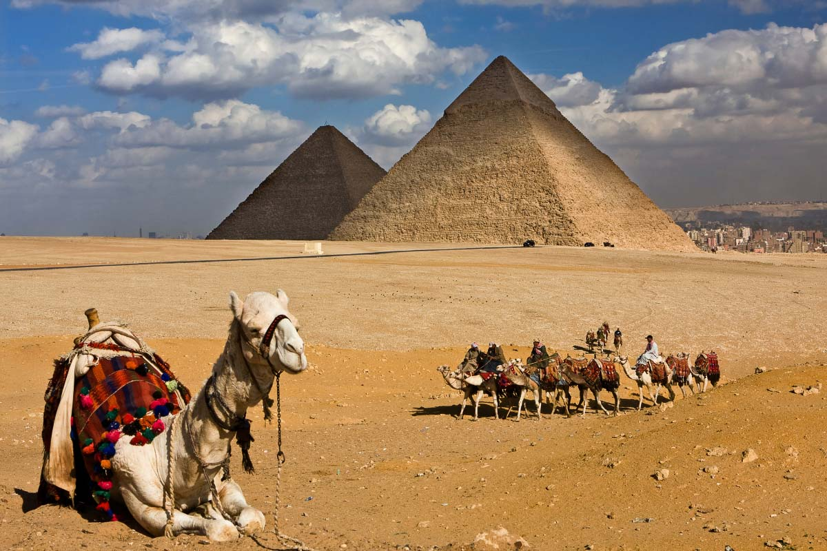 camels at the pyramids in egypt