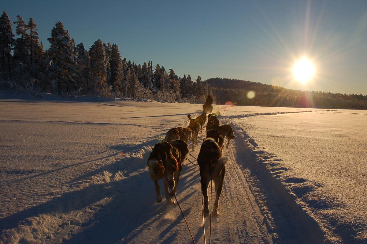 huskies in northern sweden