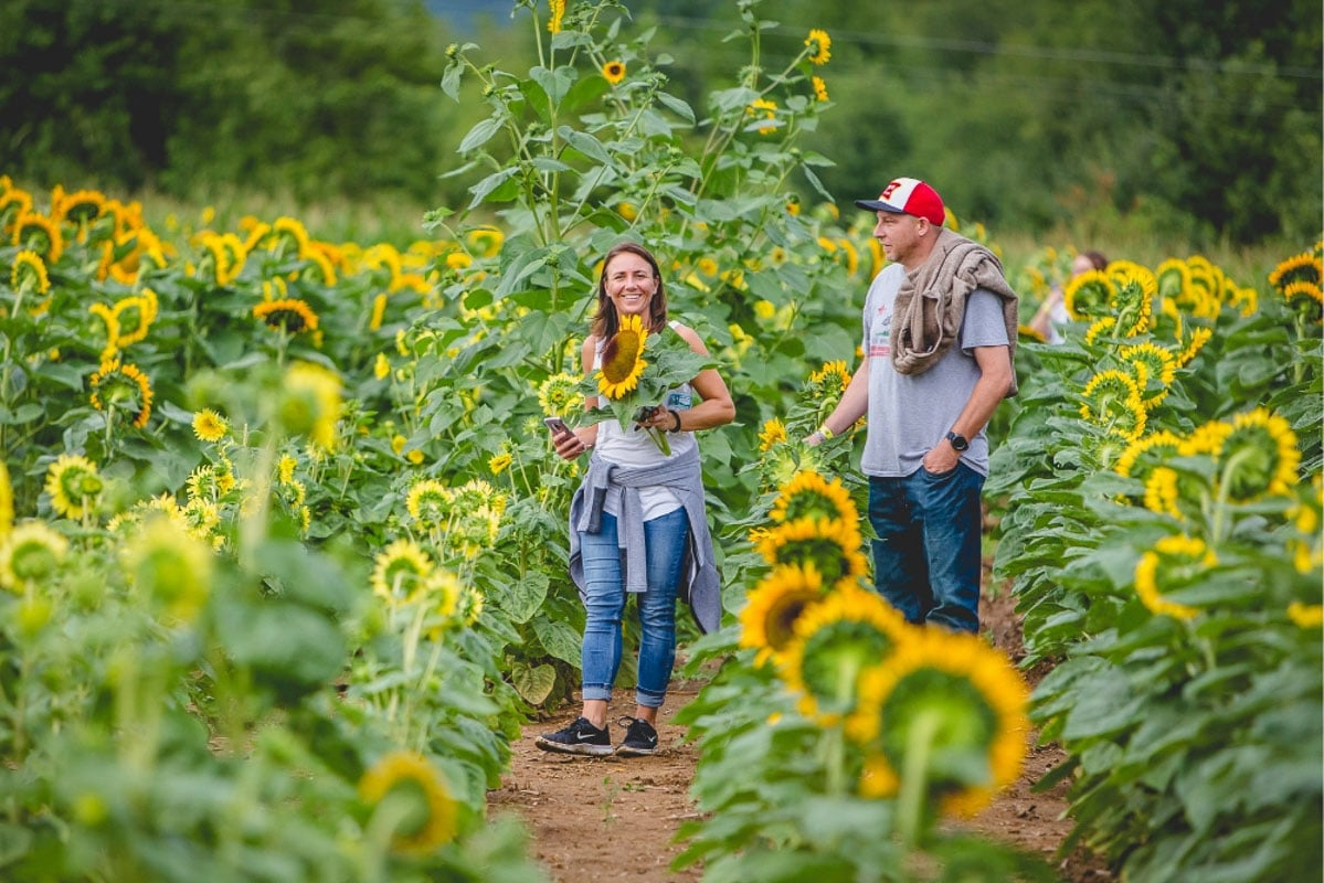 man and woman in coschocton sunflower field