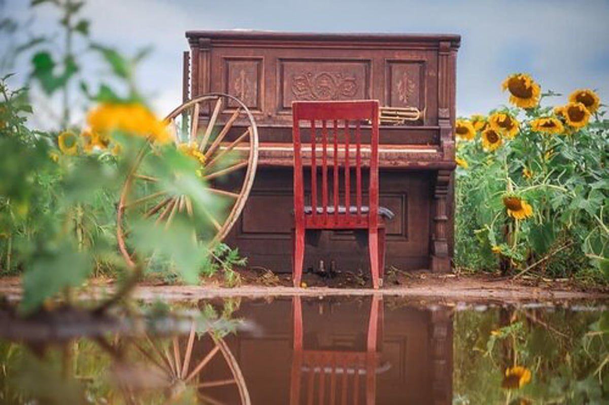 piano and red chair in sunflowers