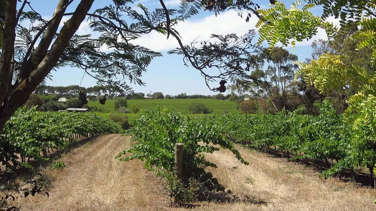 fox creek winery vineyards