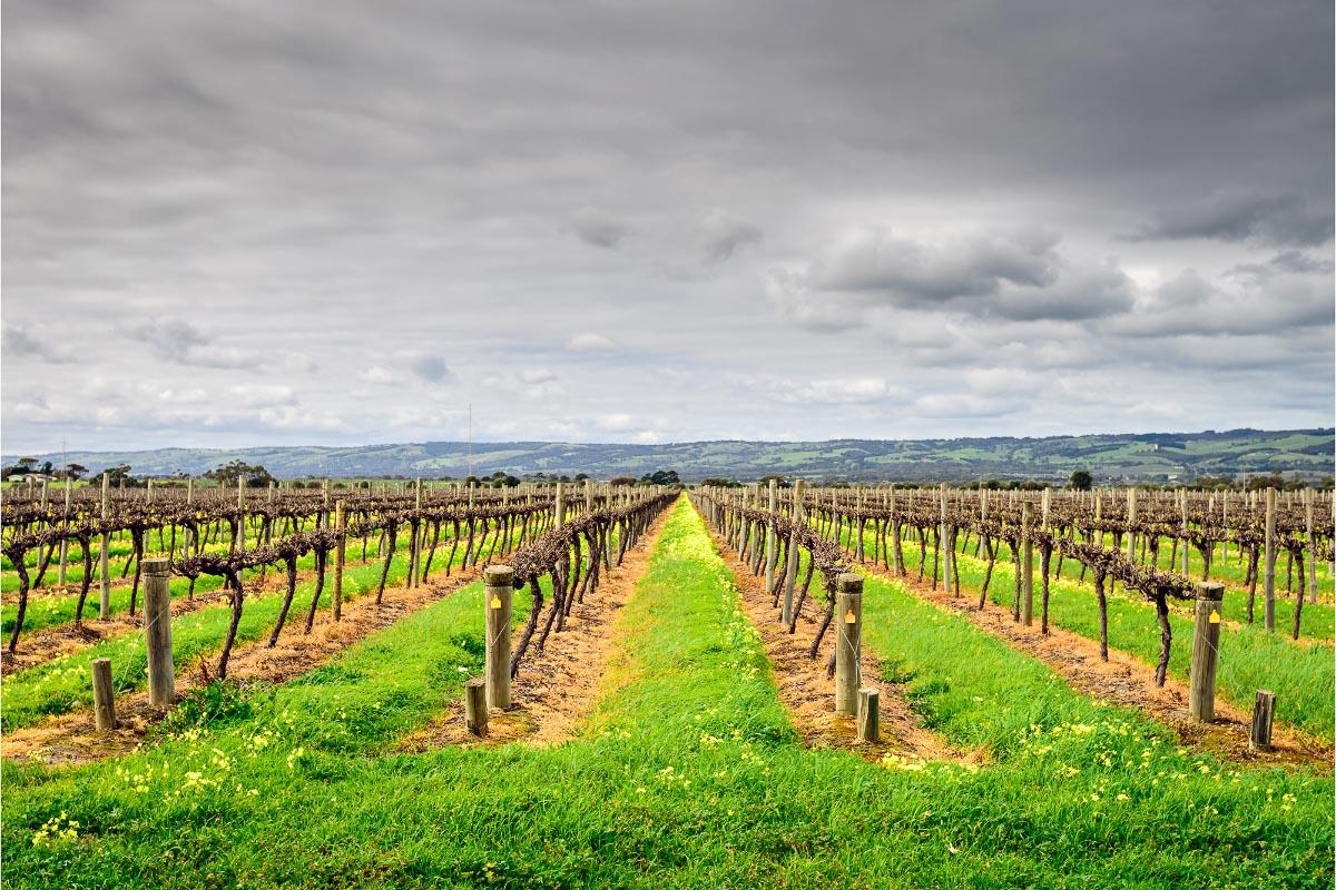 mclaren vale vineyards