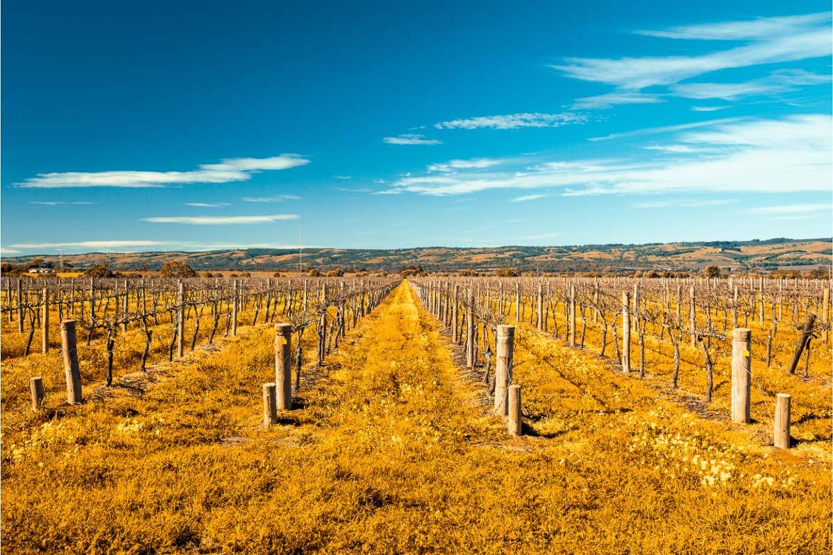 wineries of mclaren vale south australia