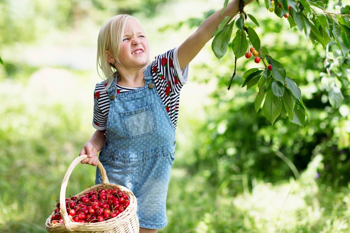 blond girl picking cherries