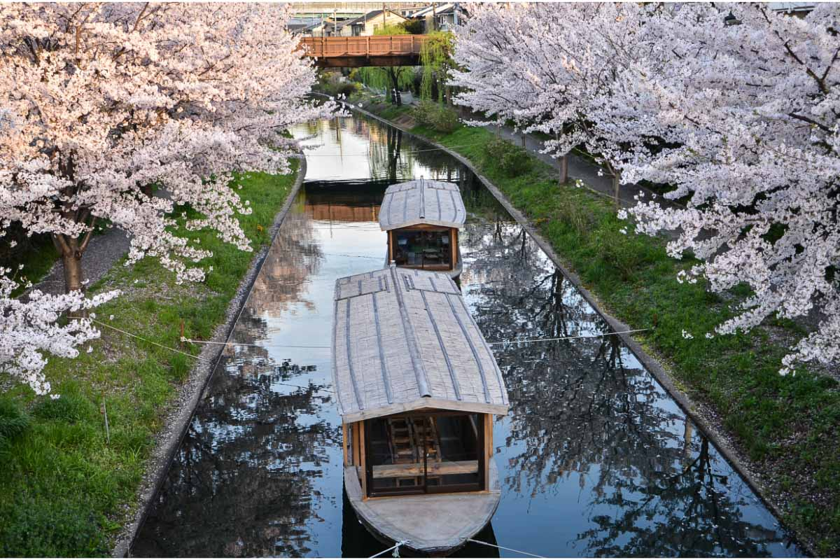 canal boat in japan framed by cherry blossoms