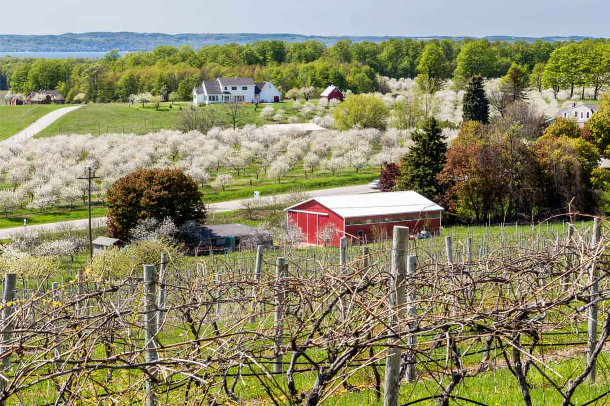 farm with cherry blossom trees in michigan