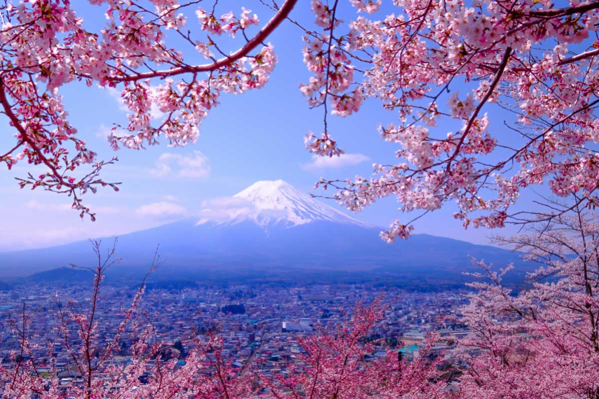 what is japan famous for cherry blossoms and mount fuji