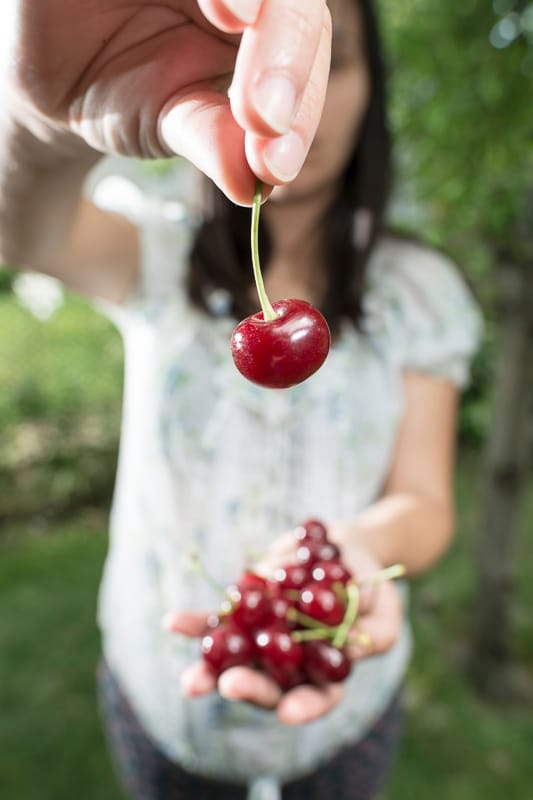 woman picking cherries holding one up
