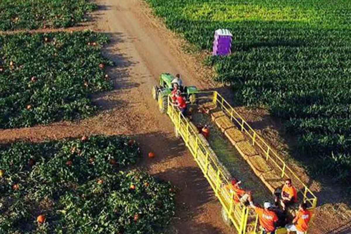 Fall Pumpkin Celebration at Apple Annie's Orchard