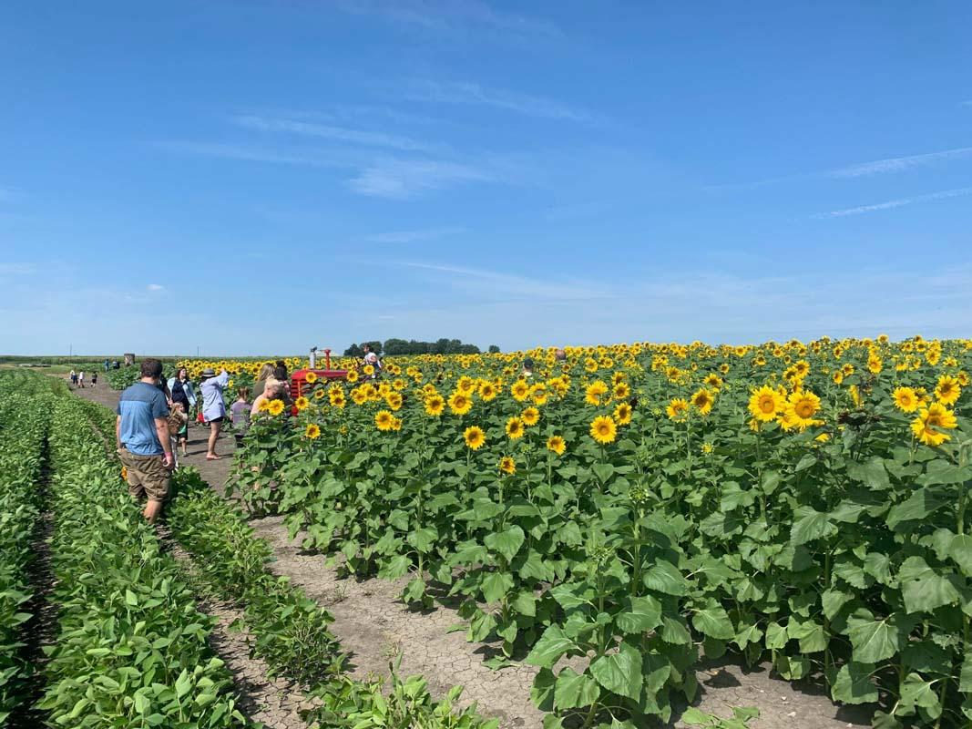 Heap's Pumpkin Farm