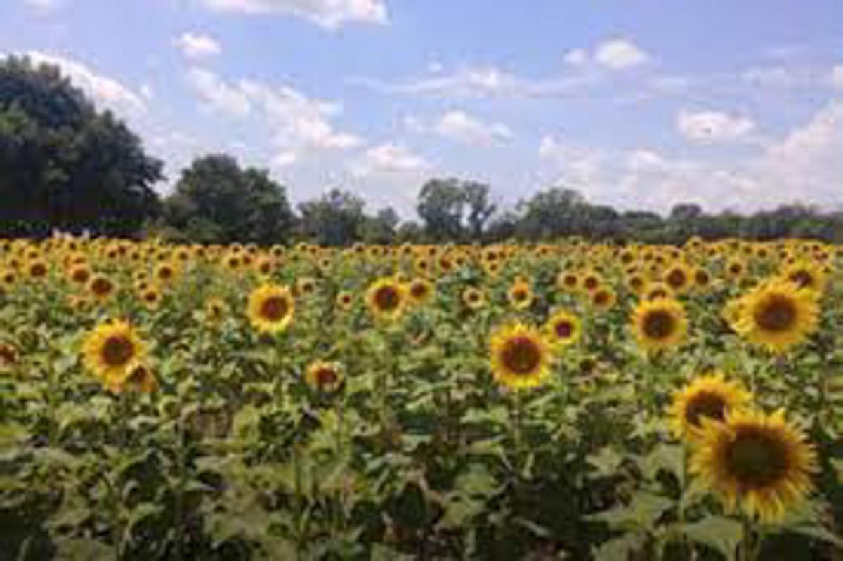 M D Farms and Garden Center