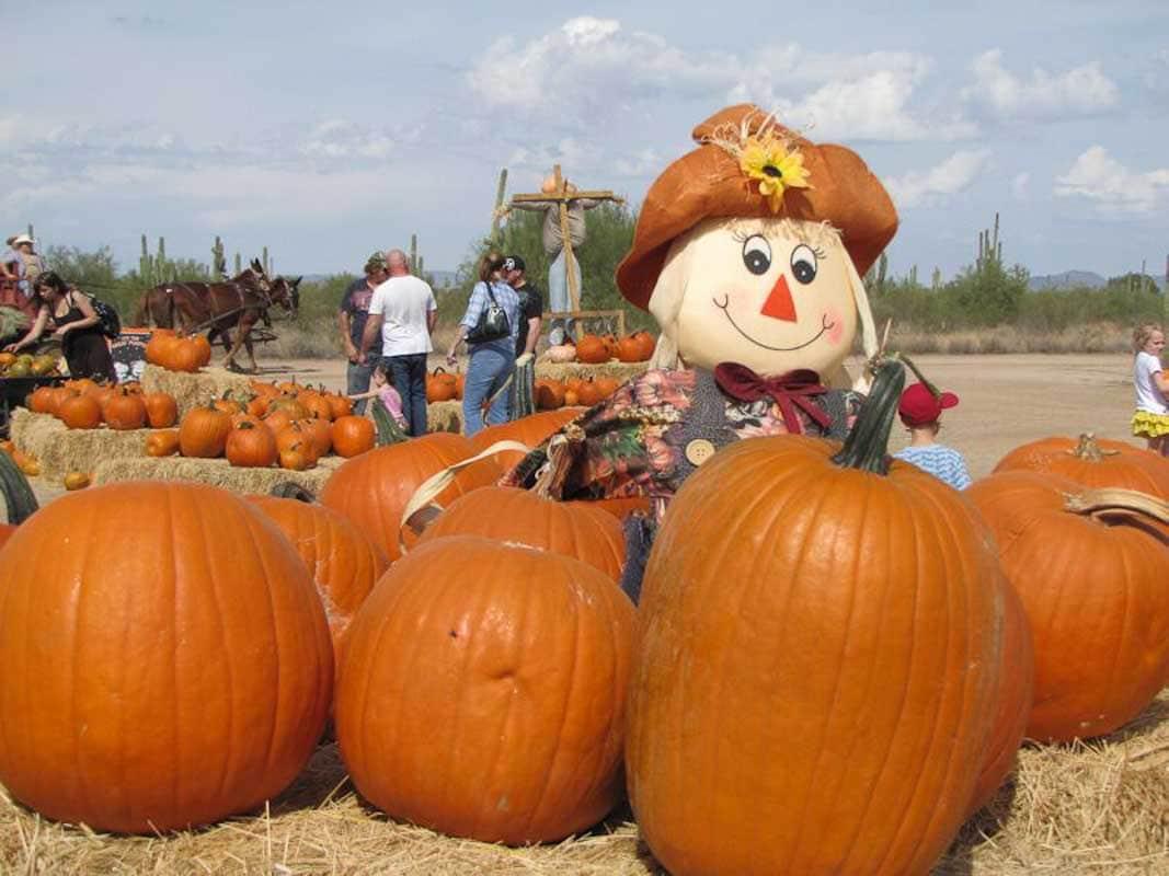 Vertuccio Farms Pumpkins