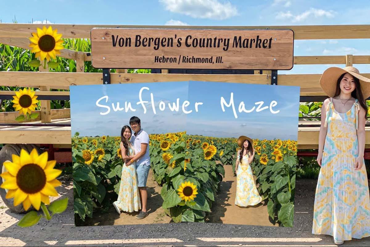 Von Bergen's Country Market sunflower fields in illinois