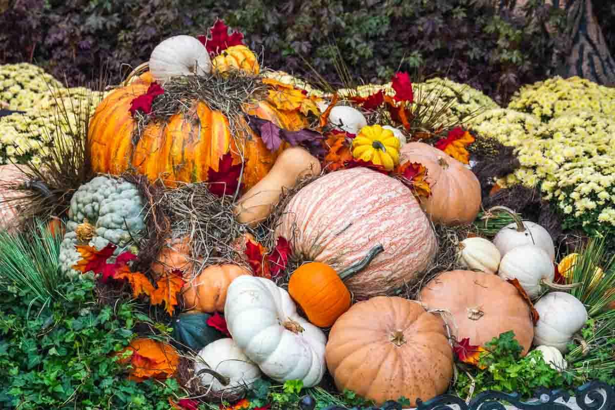 different coloured pumpkins