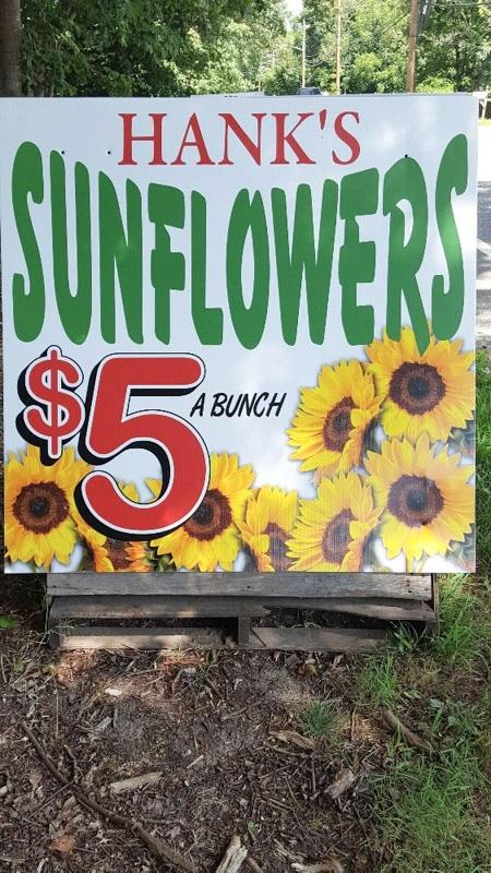 hank's sunflowers