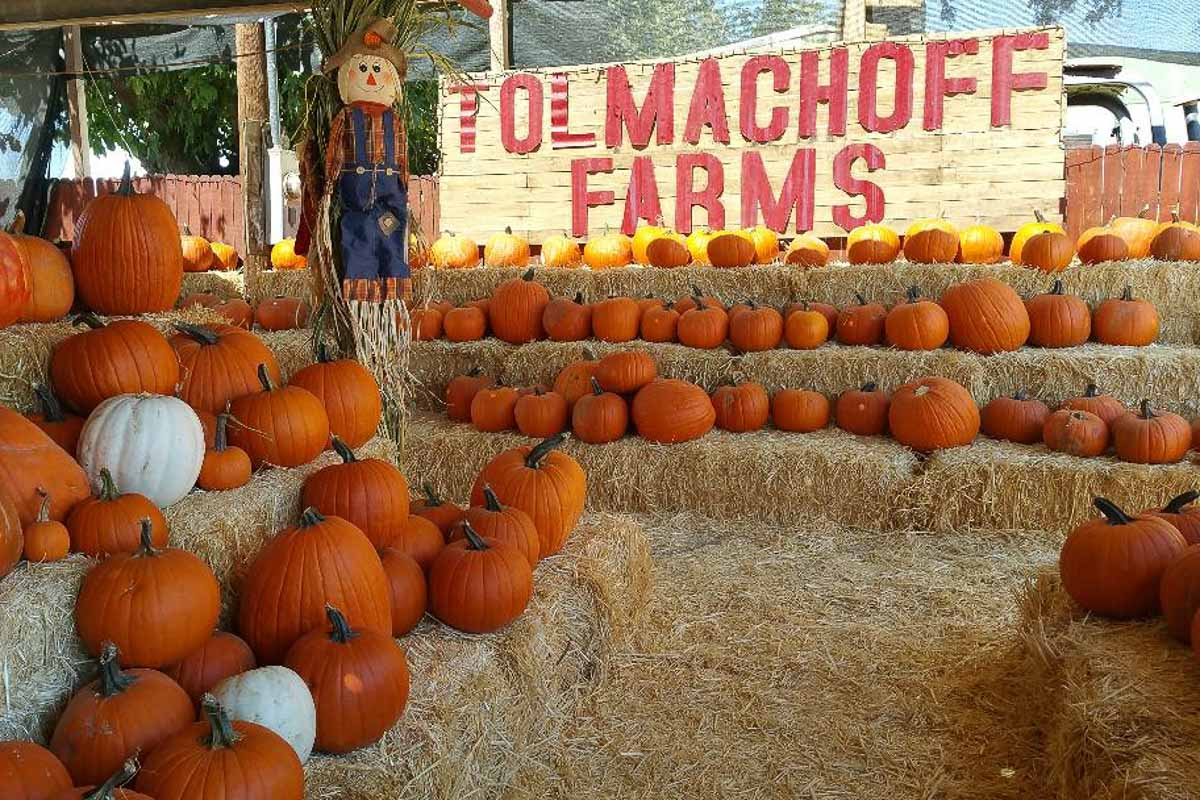 tolmachoff farm pumpkin patches in arizona