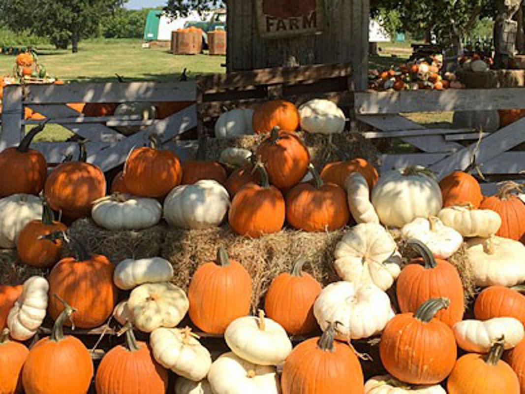 Blessington Farms Pumpkin Patch