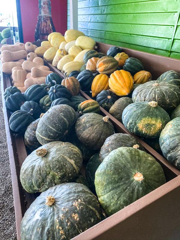 Bonita Pumpkin Farm