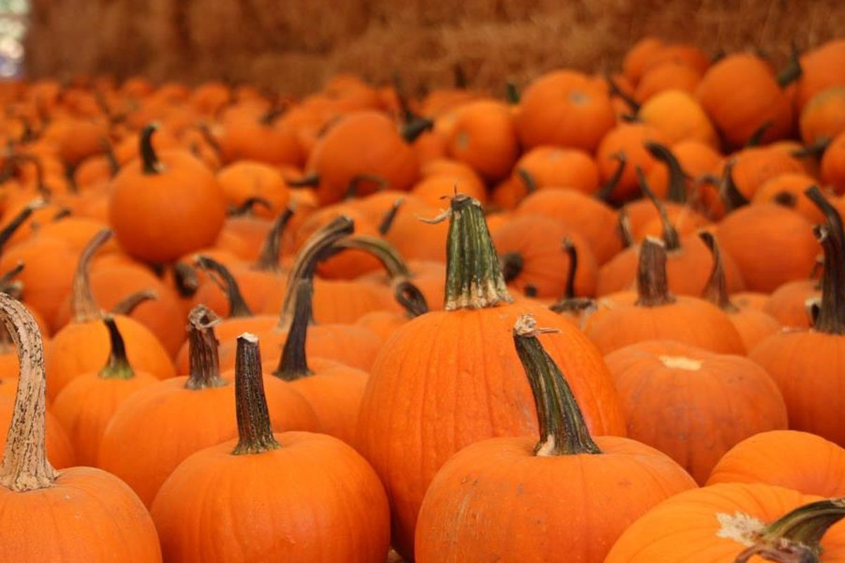 Coronado Pumpkin Patch san diego
