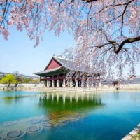 Gyeongbokgung Palace with cherry blossom in spring