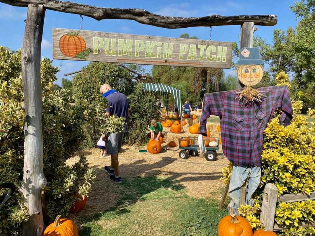 Peltzer Pumpkin Farm Pumpkin Patch san diego