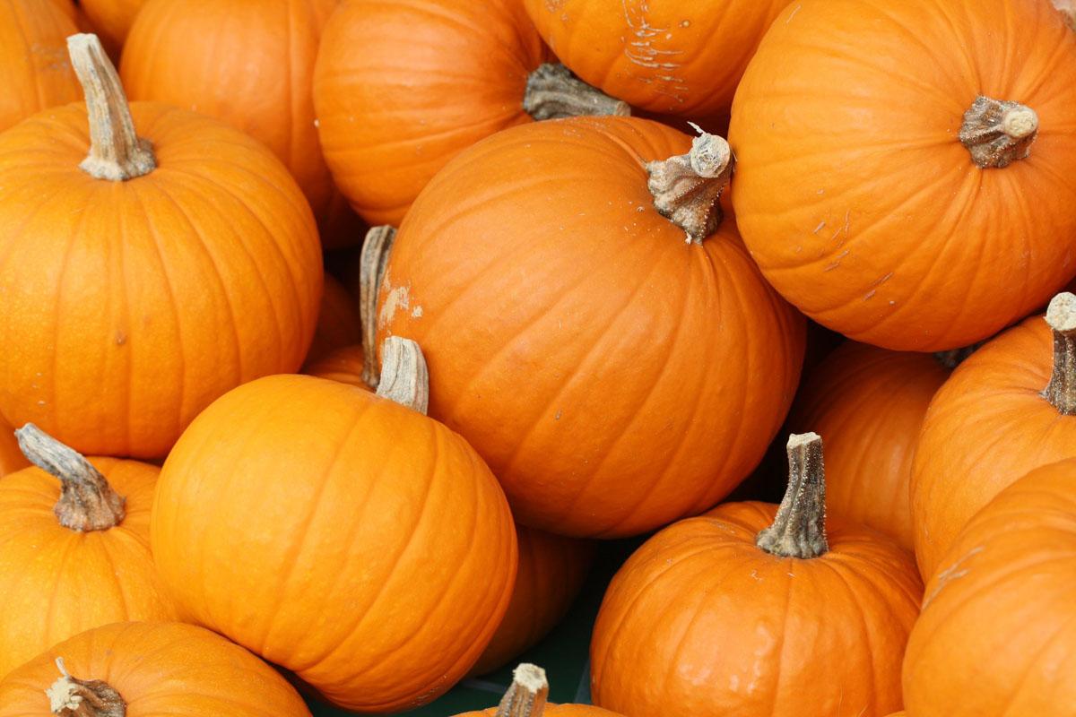 Pumpkin Express