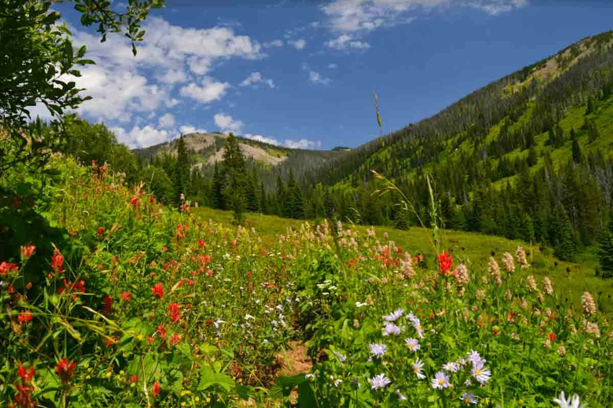 nez perce clearwater national forest