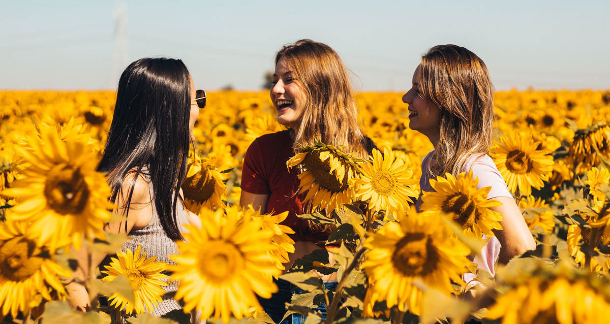 Andreotti Family Farms sunflower