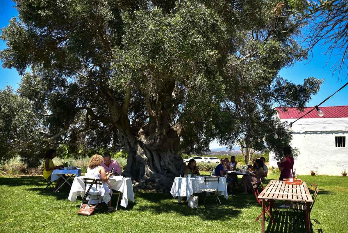 morgado do quintao algarve portugal lunch under olive tree