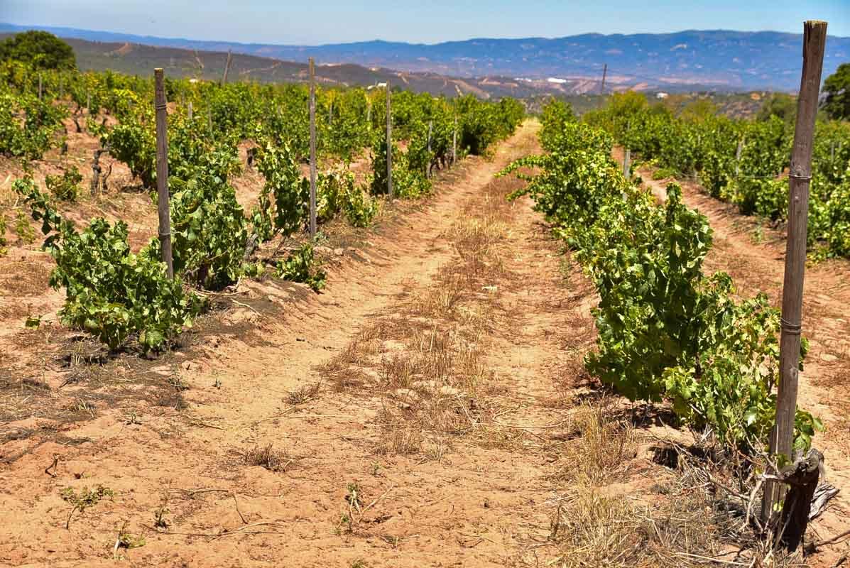 morgado do quintao algarve portugal vineyards land